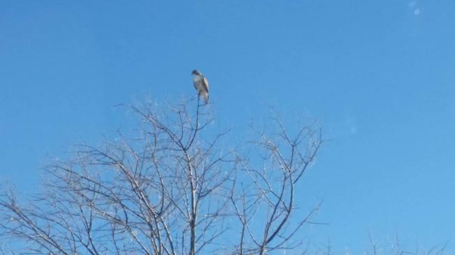 Jan 1 2016 - eagle
